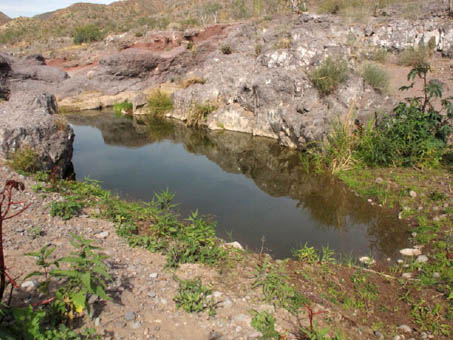 Intermittent pool at edge of river bed