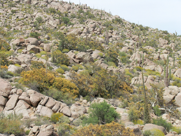 Bouldery hillside on grade south of Laguna Chapala