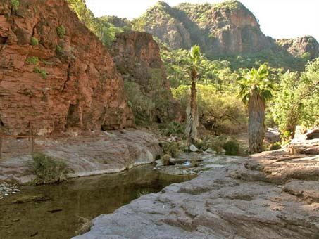 shady desert canyon